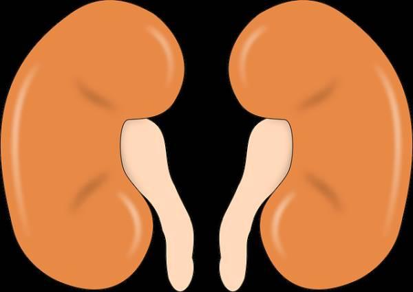 Niereninsuffizienzstadien Symptome Ursachen
